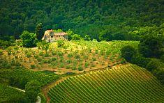 Landhäuser der Toskana - umringt von Weinreben